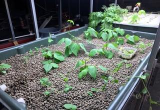 crops_1.jpg