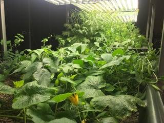 crops_2.jpg