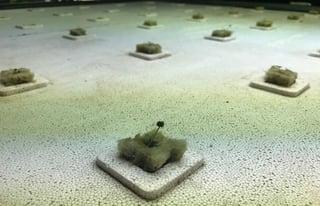 Arugula Seedlings.jpg