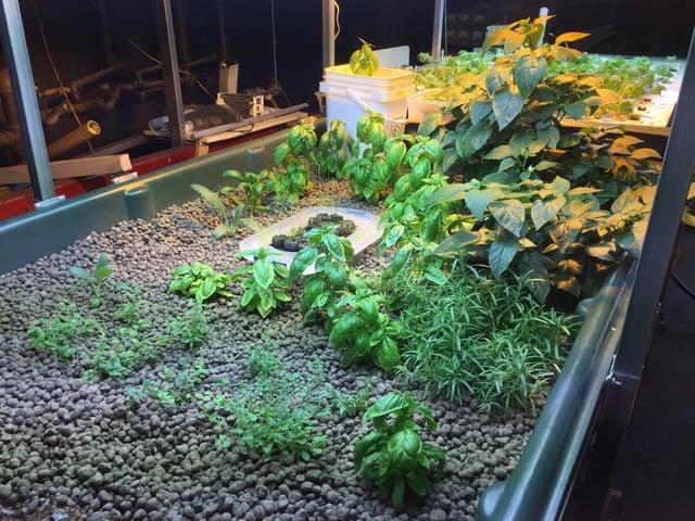 Crops in Media Bed.jpg