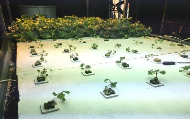 Kale in Float bed.jpg