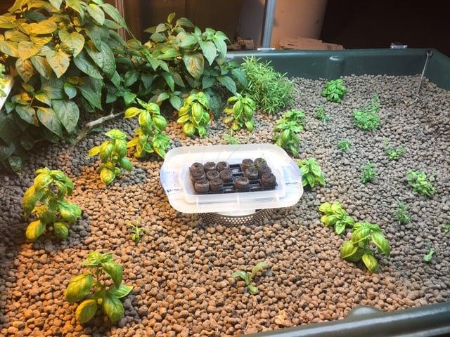 Media bed seedling development.jpg
